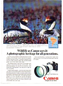 Canon F-1 Wildlife Ad Hooded Grebe (Image1)
