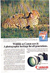 Canon F-1 Wildlife Cheetah Ad April 1983 (Image1)