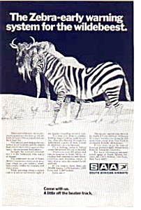 South African Airways  Zebra Ad auc3619 (Image1)