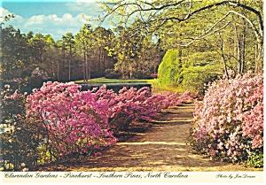 Pinehurst NC Clarendon Gardens Postcard cs0050 (Image1)