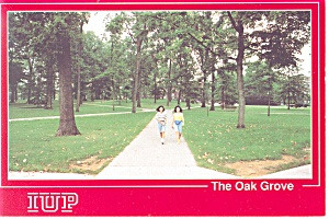 Indiana University, PA ,The Oak Grove Postcard (Image1)