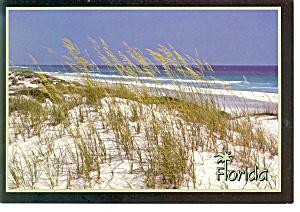 Florida Sea Oats Postcard cs0136 (Image1)