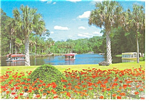 Silver Springs,Florida Glass Bottom Boats Postcard (Image1)