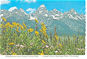 Grand Teton Peak, WY Postcard (Image1)