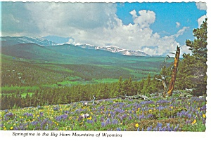 Springtime in The Big Horn Mountains, WY Postcard (Image1)