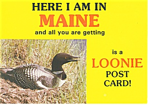 View of a Loon in Maine Postcard cs0208 (Image1)