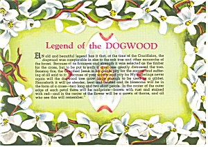 Legend Of The Dogwood Postcard (Image1)
