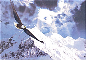 Soaring Eagle Postcard cs0252 (Image1)