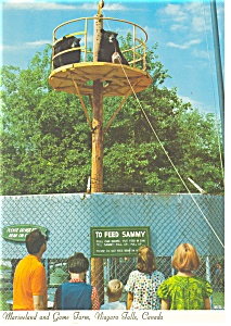 Niagara Falls Canada Marineland  Postcard cs0260 (Image1)