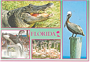 Florida Flamingos Pelicans Alligator Postcard cs0407 (Image1)
