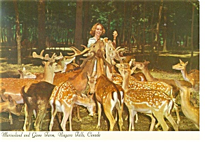 Deer at Marineland,Niagara Falls Postcard cs0444 (Image1)