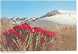 White Sands National Monument NM Postcard cs0498 (Image1)