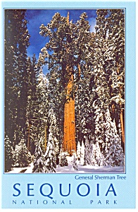 Sequoia National ParkCA General Sherman Tree Postcard cs0510 (Image1)