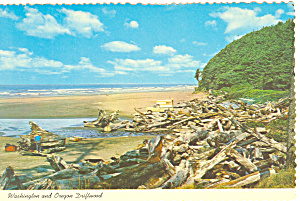 Washington And Oregon Driftwood Postcard Cs0715