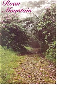 Roan Mountain Tennessee Postcard cs0824 (Image1)