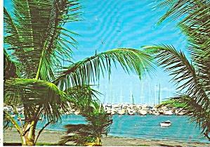 Florida Sail Boats at Rest cs10051 (Image1)