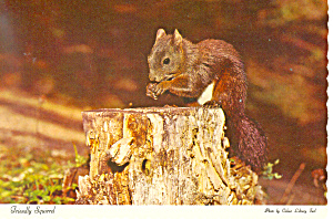 Friendly Squirrel Postcard (Image1)