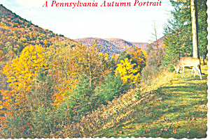 Pennsylvania Autumn Portrait Postcard (Image1)