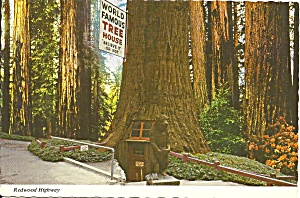 Redwood Highway Or Famous Tree House Cs10882
