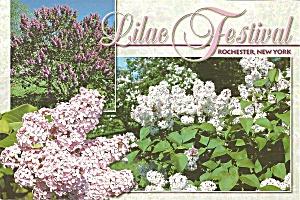 Rochester NY Lilacs cs11129 (Image1)