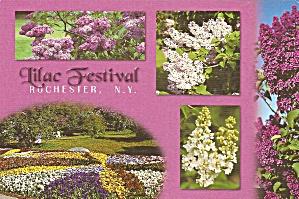 Rochester NY Lilac Festival cs11130 (Image1)