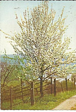 Germany Flowering Tree cs11269 (Image1)