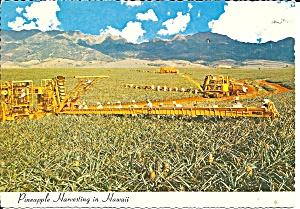 Hawaii Pineapple Harvesting cs11360 (Image1)