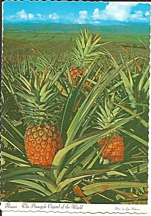 Hawaii The Pineapple Capital of the World cs11750 (Image1)