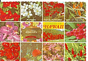 Flowers Of Hawaii Cs11760