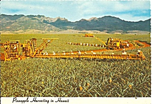 Pineapple Farming in Hawaii cs11791 (Image1)