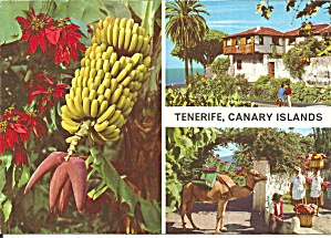Tenerife Canary Islands Cs118603