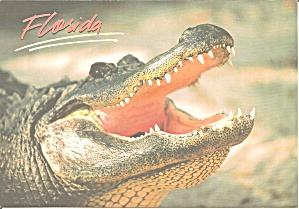 Florida Alligator Anytime Is Snack Time Cs11935
