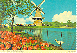 Tulip Time at Holland, MI Postcard (Image1)