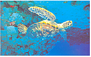 Sea  Turtle Postcard (Image1)