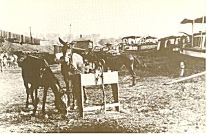 Chesapeake and Ohio Canal Mules Postcard (Image1)