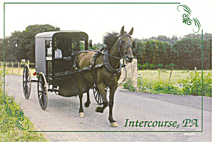 Amish Horse and Buggy Postcard (Image1)