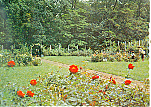 Garden at Hokkaido University Japan  Postcard cs1576 (Image1)