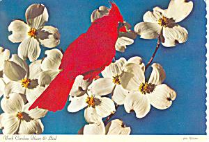 North Carolina State Bird State Flower  Postcard cs1671 (Image1)