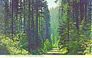 Fir Lined Highway Pacific Northwest Postcard