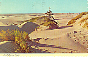Sand Dunes Oregon Postcard cs1711 1972 (Image1)