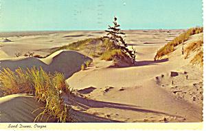 Sand Dunes, Oregon Postcard 1972 (Image1)