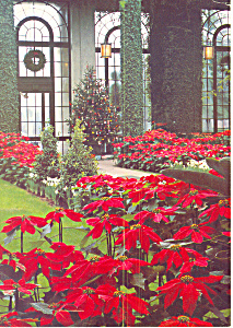 Poinsettas at Longwood Gardens, PA Postcard 1981 (Image1)