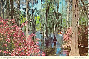 Cypress Gardens Charleston SC Postcard cs1764 (Image1)
