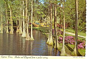 Greenfield Gardens Wilmington NC Postcard cs1765 (Image1)