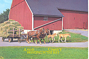 Amish Hay Wagon And Draft Horses Postcard Cs1816