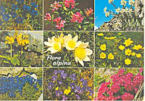 Flora Alpina Switzerland Postcard cs1969 (Image1)