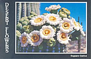 Saguaro Cactus Flowers,State Flower, Arizona Postcard (Image1)