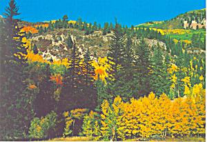 Golden Aspens New Mexico Postcard cs1992 (Image1)