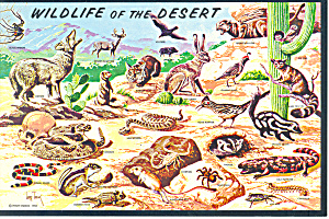 Wildlife Of The Desert Postcard