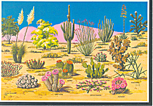 Cacti And Desert Flora Of The Southwest Postcard Cs1998